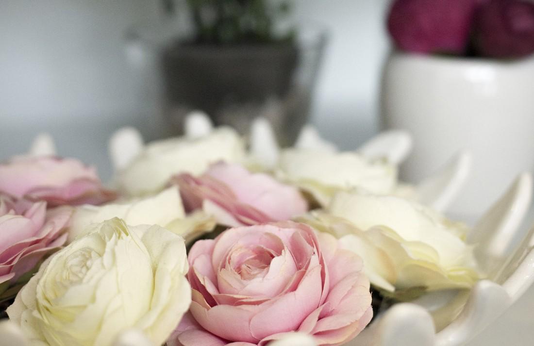 Plantas Decorativas